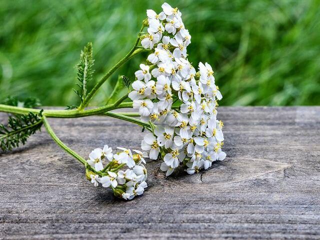 Цветы, устойчивые к жаре и засухе